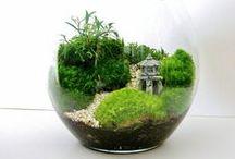 Terrariums and Indoor Plants