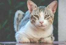 Pets Project / Fotografie di animali domestici realizzate da Francesco Menzera
