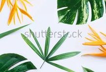 Shutterstock Tropical Pattern / flat lay, palm, flowers, tropic, tropical, pattern,botanic, green, floral,exotic, travel, holiday,flatlay, top view, over head, store sale, summer, spring, collage, set, fashion, funky design, blog, blogger, desk space, still life, essentials,  island, decoration, foliage,  botanical, blossom bloom, gardening, beauty, botany, jungle hawaii, petal branch, isolated white background, card template, copy space, mockup, work space, mock up,   vacantion, empty blank,
