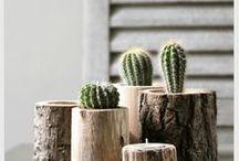 Krukväxter | Plants