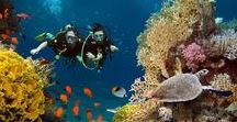 Punta Mita Area Activities / PUNTA MITA ACTIVITIES: If you manage to get away from paradise at Casa Joya Del Mar, here are some fun activities to try in the Punta Mita area: paddleboard, zipline, whale watching, Isla Marieta Islands, deep sea fishing, scuba & snorkel.