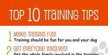Pet Pedagogy / Adult Dog Training Tricks & Tips, Positive teaching methods
