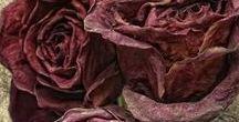 Marsala,burgundy,plum,purple hues