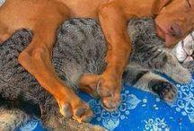 Chiens et chats et renards...