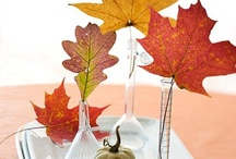 autumn ridge / by Linda Winnie