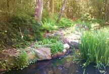KatrinaMayer.com / Sharing inspiration for a happier, healthier and more abundant life. http://katrinamayer.com   / by Katrina Mayer