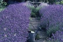 Ways Around A Dream Garden / The hopes & dreams of my future garden
