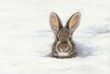 Bunnies / Bunny rabbit pictures, art and products.