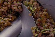 Organic Winemaking / The life of a biodynamic vineyard #naturalwinemaking #biodynamic #demeter #winemaking #organicwine #naturalwine #maremma #tuscany