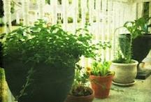 Limelight Musings: Garden
