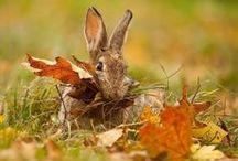 Autumn / by Hugs4Chris