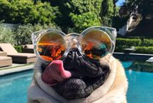 Pug me up boi / Your daily pug fix