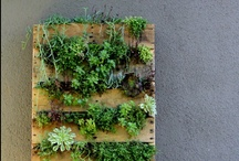 Vertical Gardens / Stunning vertical gardens from around the world, including flower gardens, herb gardens & DIY gardens. / by Garden Design
