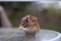 Cute babies &animals <3 / by Tori Urbanczyk