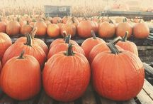 all things Pumpkin :) / by Tiffany Faber
