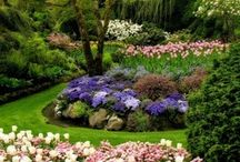 Beautiful flowers and Gardening Ideas