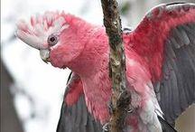 Photos: Parrots Lorikeets / Macaw, Galah, Rainbow Lorikeet