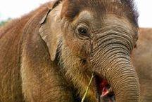 Photos: Elephants