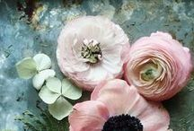 Floral / Floral art and photography