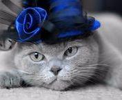 colour splash   cobalt blue / color board   art • fashion • décor in grey   touch of royal blue