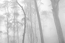 misty morning grey   / color board   art in grey mist and fog