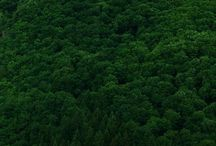 Trees. / by Kady Feeney
