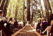 Wedding Bells Will Ring. Wedding Bells Will Chime. / by Chloe Vollenweider