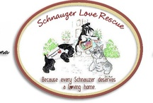 Favorite Animal-related Organizations / These are rescue groups that I have personally worked with over the years. They are all great organizations!