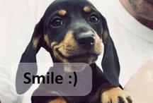 Smile =) / #fun #smile #laugh / by Claudia Alvarado