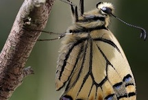 Poetry of Nature / Nature. Animals. Insects. God's creatures. / by Lisa Shelton