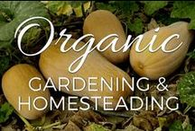 Organic Gardening & Homesteading / Tips, ideas and inspiration on organic gardening, homesteading, Permaculture and regenerative agriculture / by Small Footprint Family