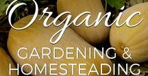 Organic Gardening & Homesteading / Tips, ideas and inspiration on organic gardening, homesteading, Permaculture and regenerative agriculture