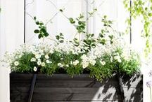 garden. / outdoor spaces, yards, gardens.