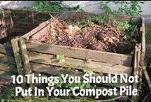 Best of Small Footprint Family / Most Popular Posts from SmallFootprintFamily.com   #gardening #naturalhealth #greenliving #paleo #glutenfree / by Small Footprint Family