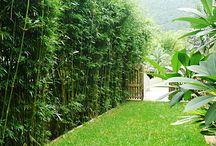 Garden / Garden ideas