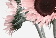 Nature / Beautiful nature photography, flowers, animals, birds, plants,