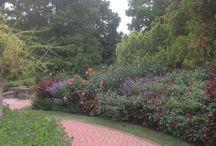 Longwood Garden Treasures