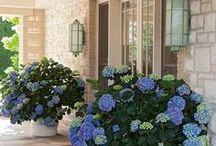 garden - house