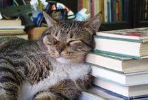 Book Addict / book addict, I love books, book quotes, book worm, book nerd, must read books