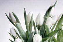 ▲ FLOWERS / PLANTS