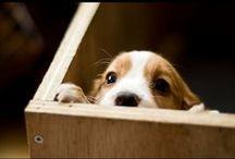 cute pics / by Komal Dhillon