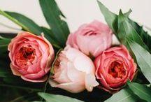 Wedding / by Elizabeth Mahaffey