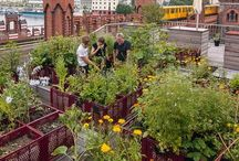 Urban Gardening / Hier zeigen wir, dass Stadtleben und gärtnern sich nicht ausschließen. Im Gegenteil!