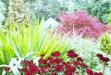 Gardening & Landscaping Ideas, Tips