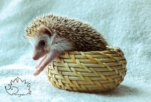 Useless but Funny/Adorable Animals / by Abbey Joyce