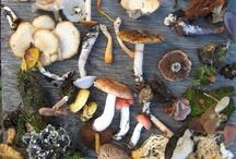 Mushrooms / by Abbey Joyce