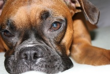 No love like a boxer's love / by Robyne Poole