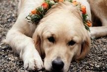 i don't have a dog, so i have a pinterest. / by Liz Ragland