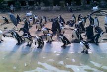 Artist Zoo Amsterdam