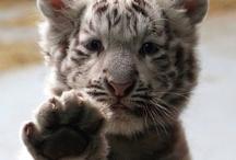 Animal Kingdom / by Jen DeRusha